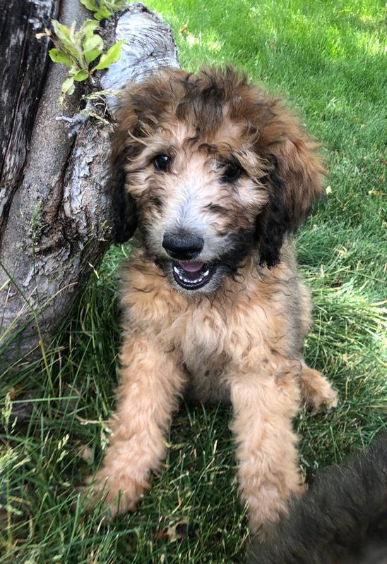 Evergreen Canine - Home